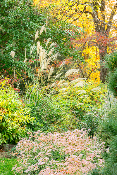 The Baltimore, MD garden of Penney and A.C. Hubbard, October 27-28, 2014.